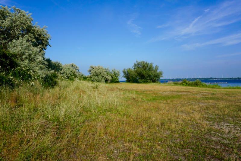 Duinachtige begroeiing op het eiland Mosselbank