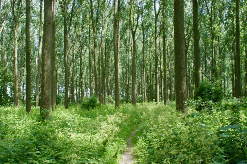 Rondje Paardenkreek in het bos bij Kortgene
