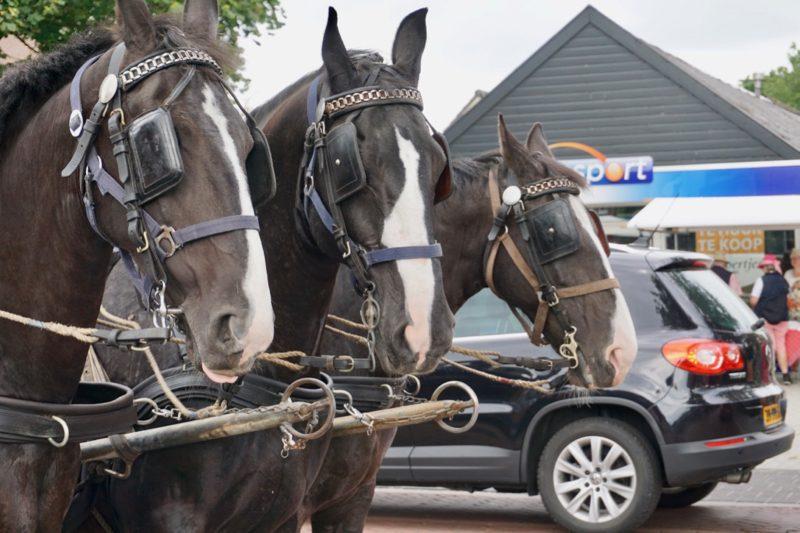 Drie paarden ingespannen voor rondritjes door Staphorst